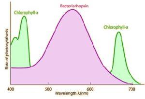 Light spectrums wavelength graph
