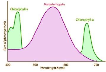how to work spectrum pro light works