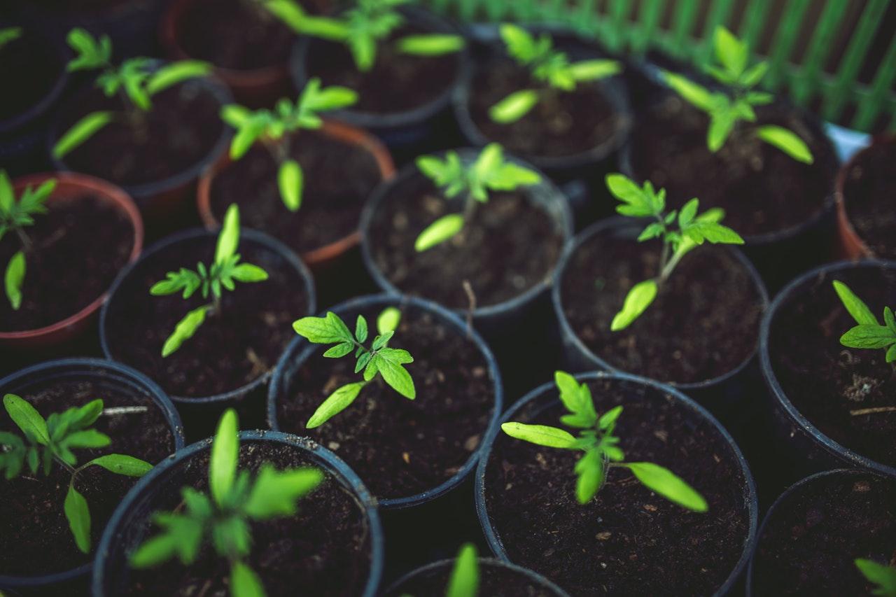 LED Grow Lights on Indoor Gardening