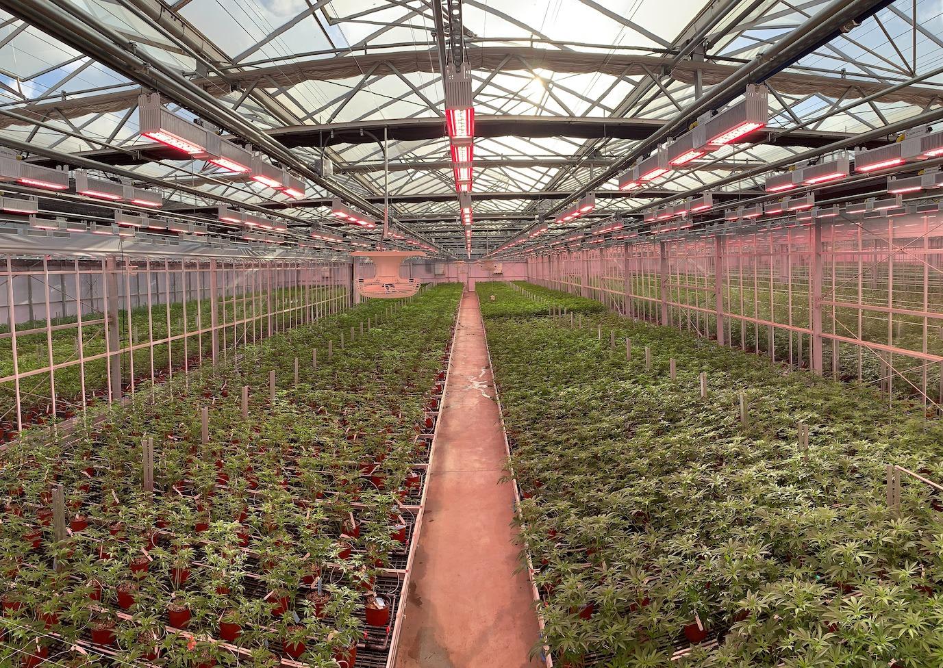greenhouse LED lights