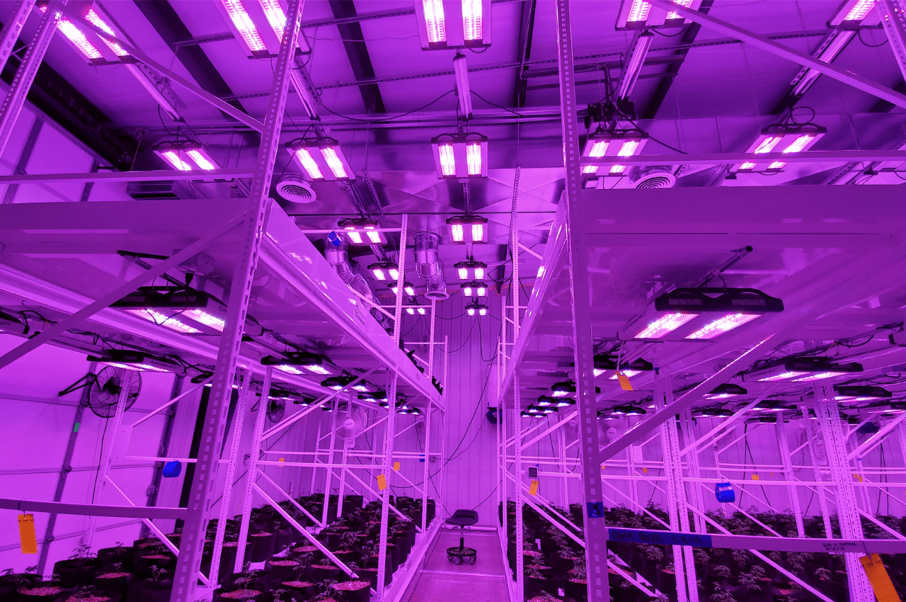 switch from HPS to LED grow lights