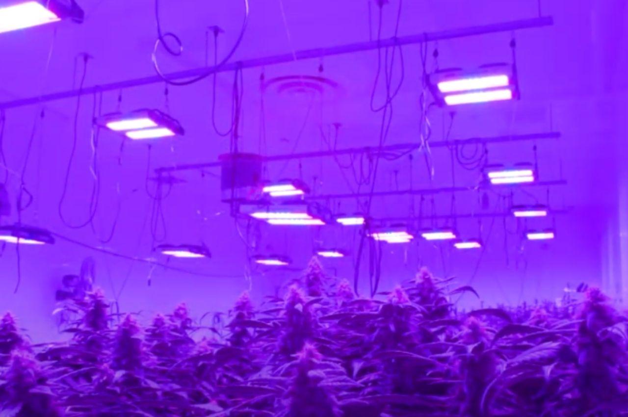 Indoor Grow Light Plan