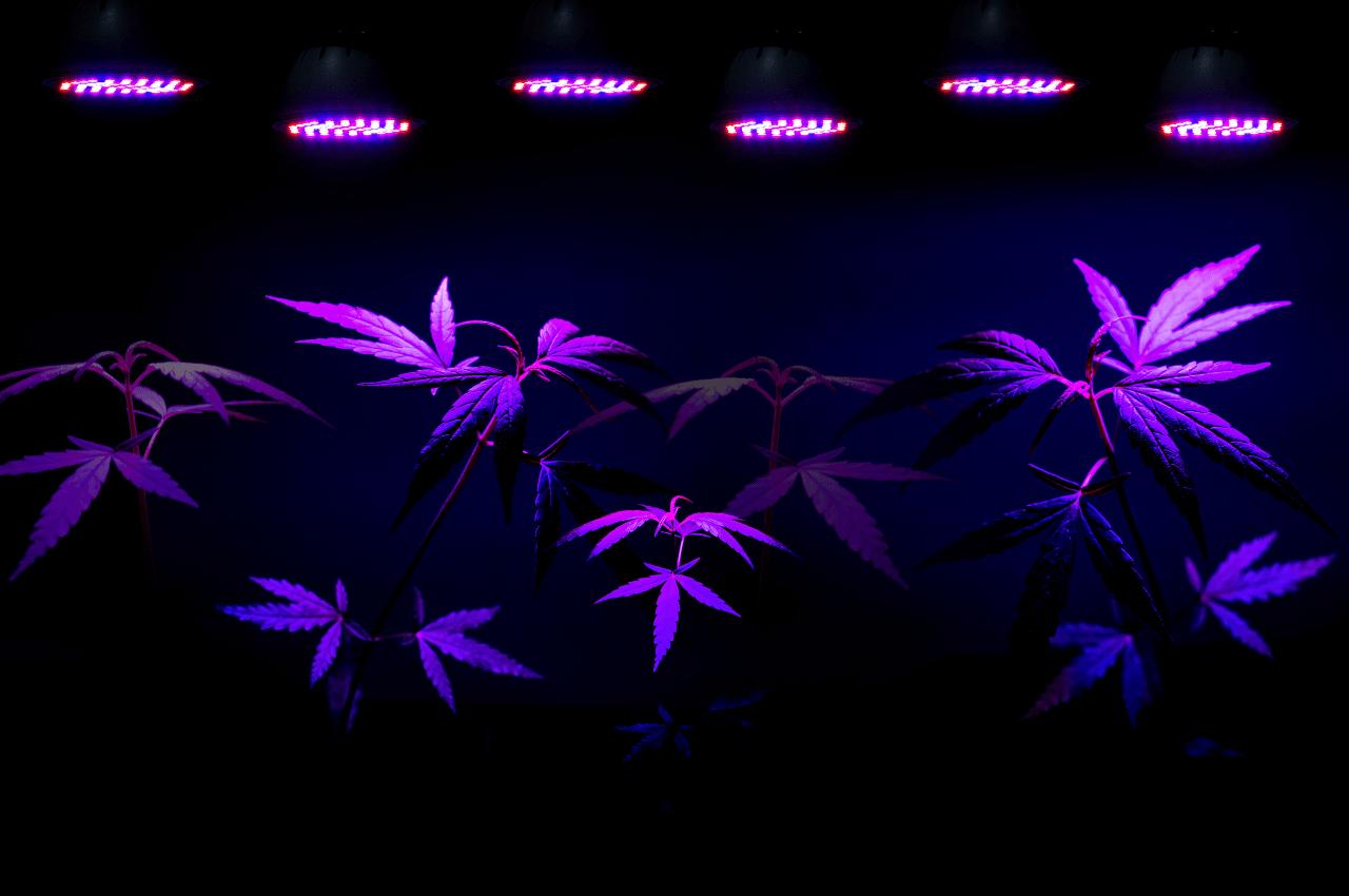 environmental benefits of LEDs