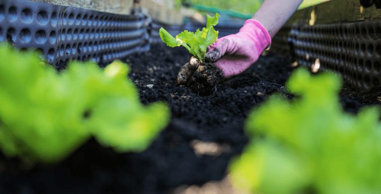 soil and fertilizer management