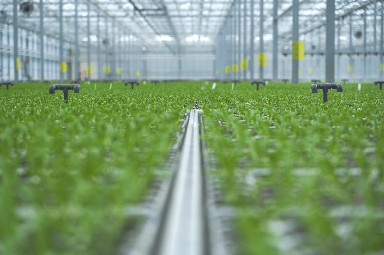 LED Greenhouse lights