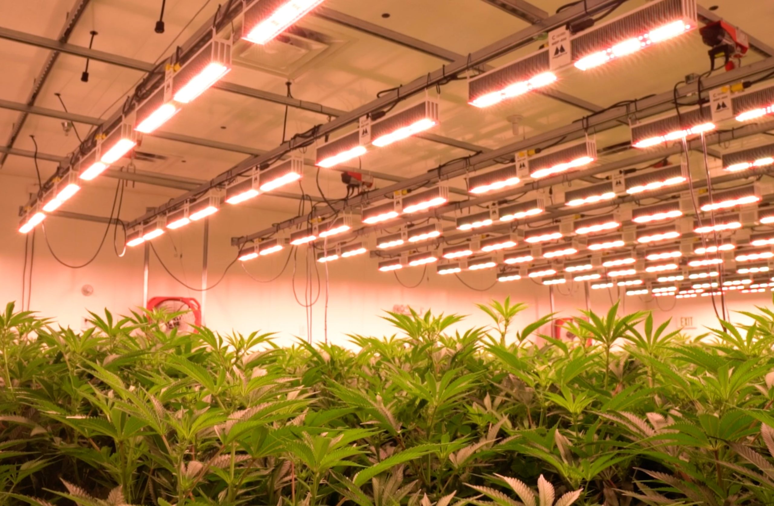Grow Ohio - Testing Our LEDs Against The Competition