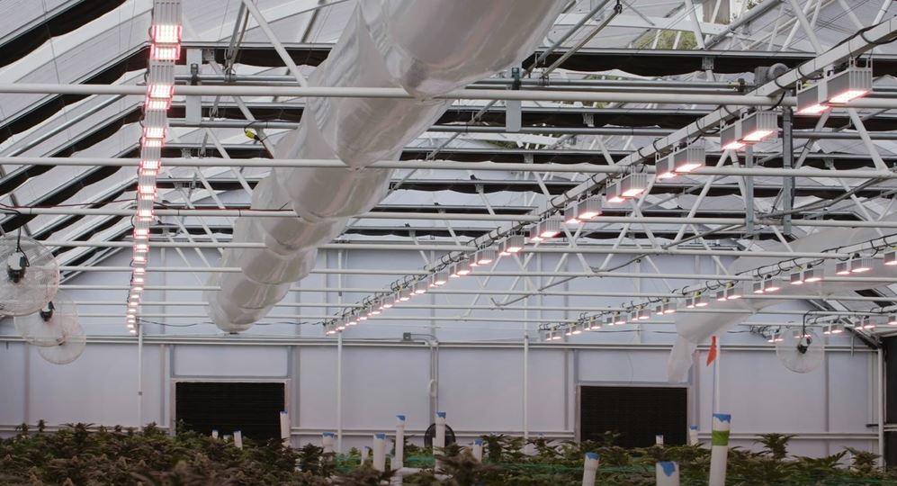 greenhouse led grow lights