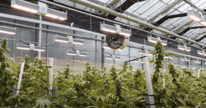 Cannabis Trends That Will Dominate in 2021